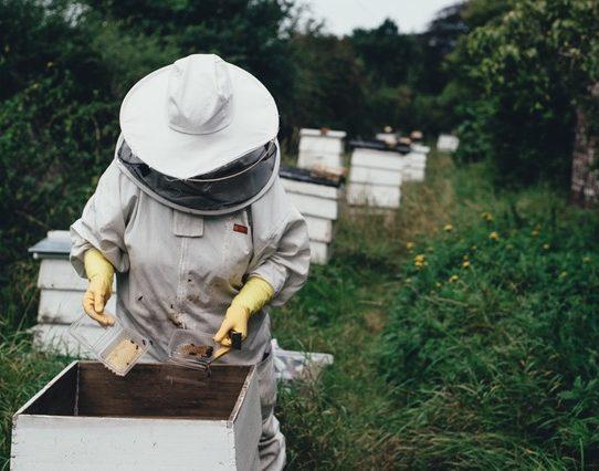En quoi consiste le métier d'apiculteur ?