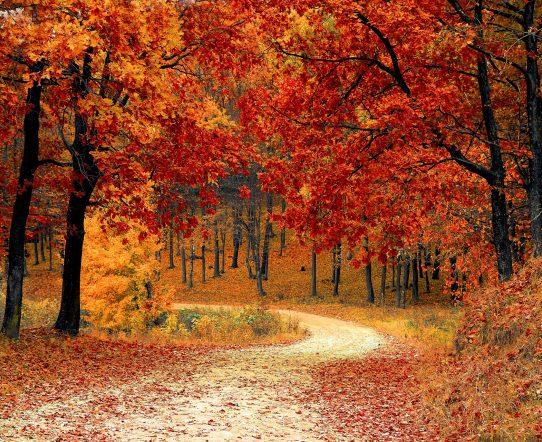 Quelles sont les couleurs tendances de cet automne ?