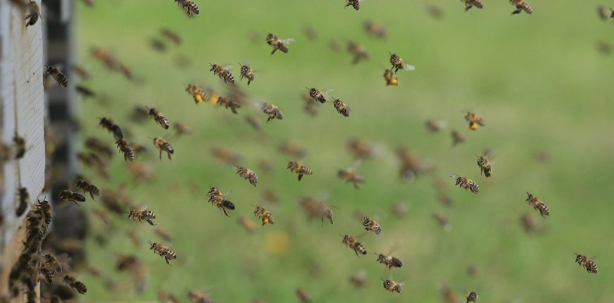 Comment travaillent les abeilles ?