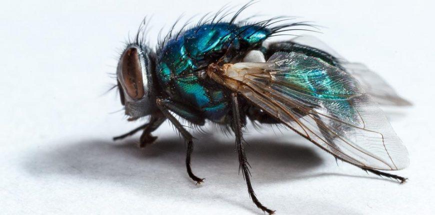 Combien de temps vit un insecte en moyenne